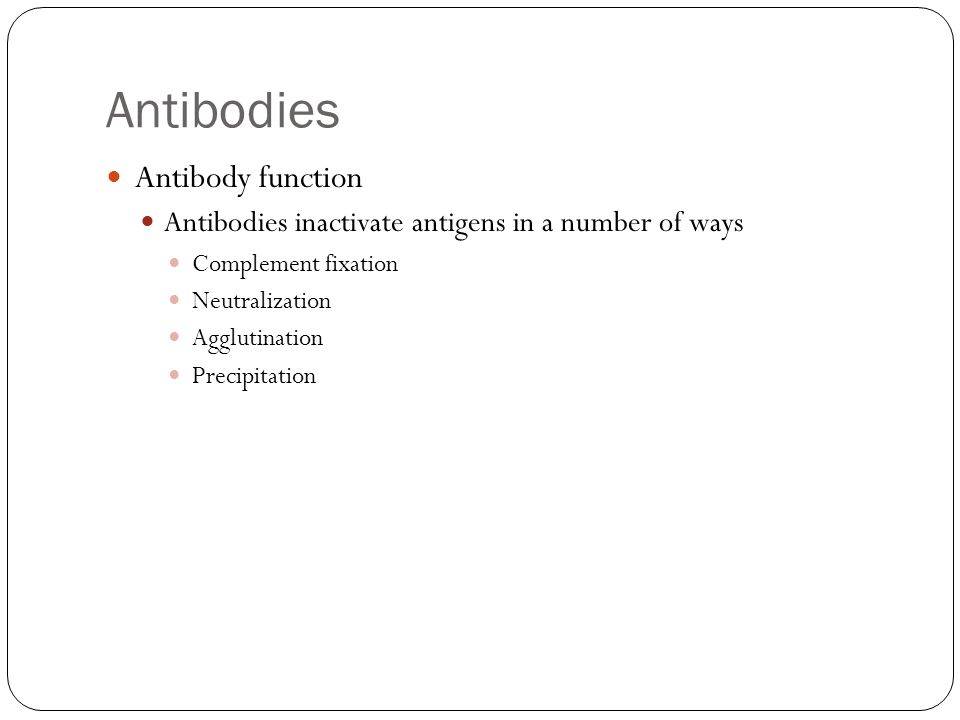 Antibodies Antibody function