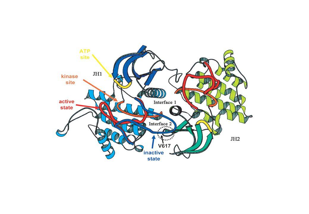 Type I cytokine receptors