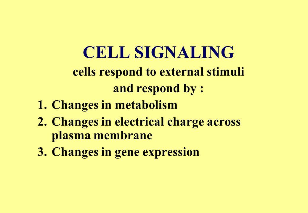 Cell death CD95L CD95 Active Caspase Death Domain Procaspase
