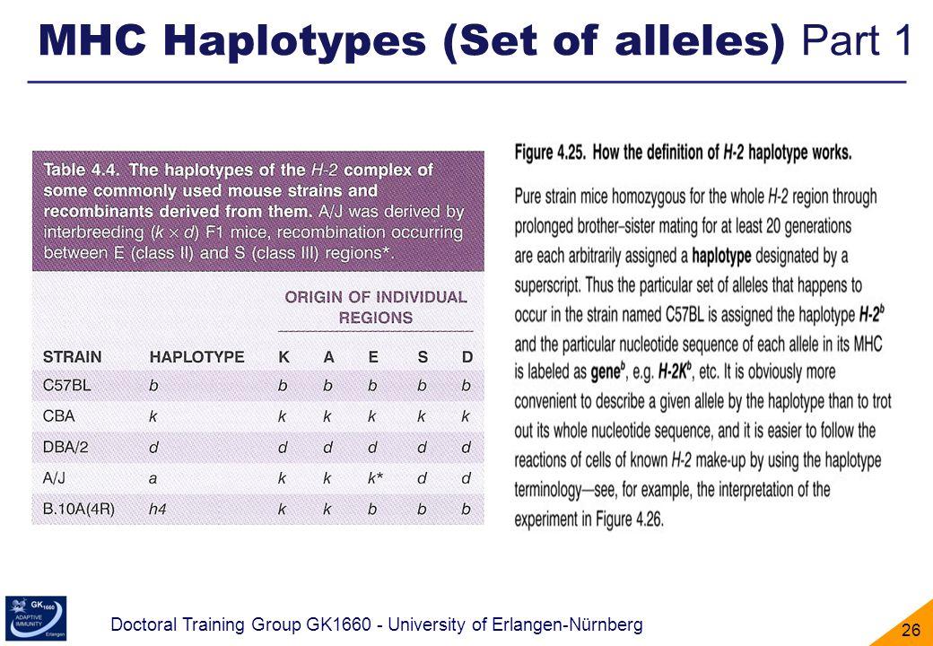MHC Haplotypes (Set of alleles) Part 1