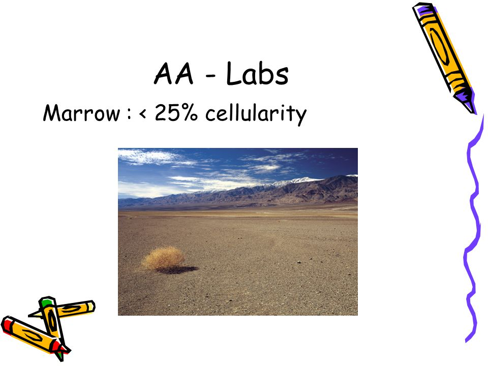 AA - Labs Marrow : < 25% cellularity