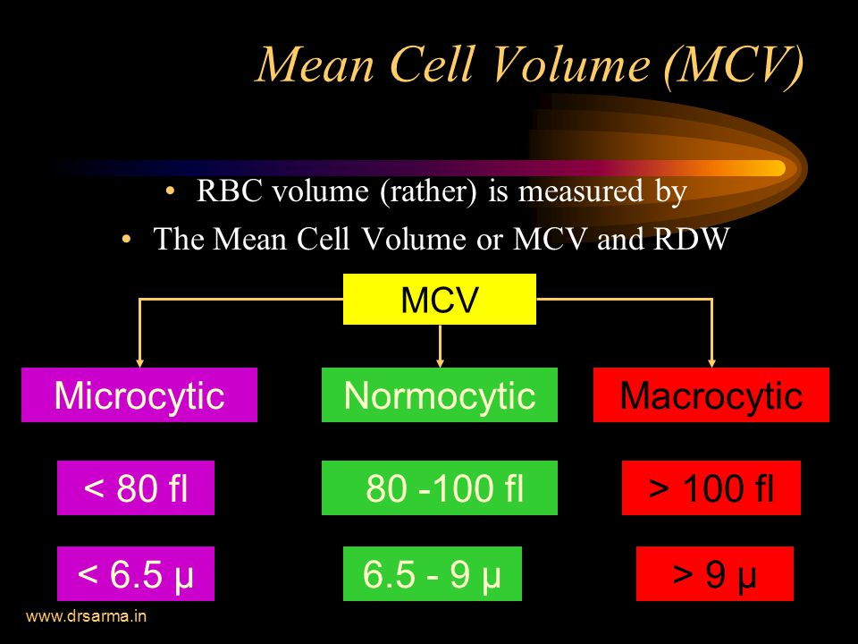 Mean Cell Volume (MCV) Microcytic < 80 fl Normocytic Macrocytic