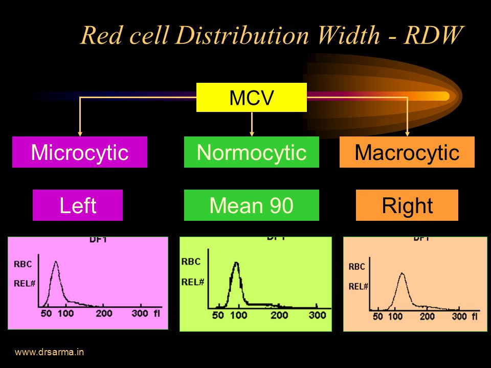 Red cell Distribution Width - RDW