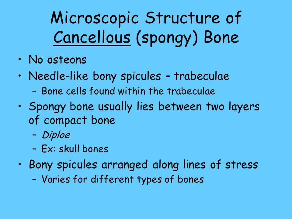 Microscopic Structure of Cancellous (spongy) Bone