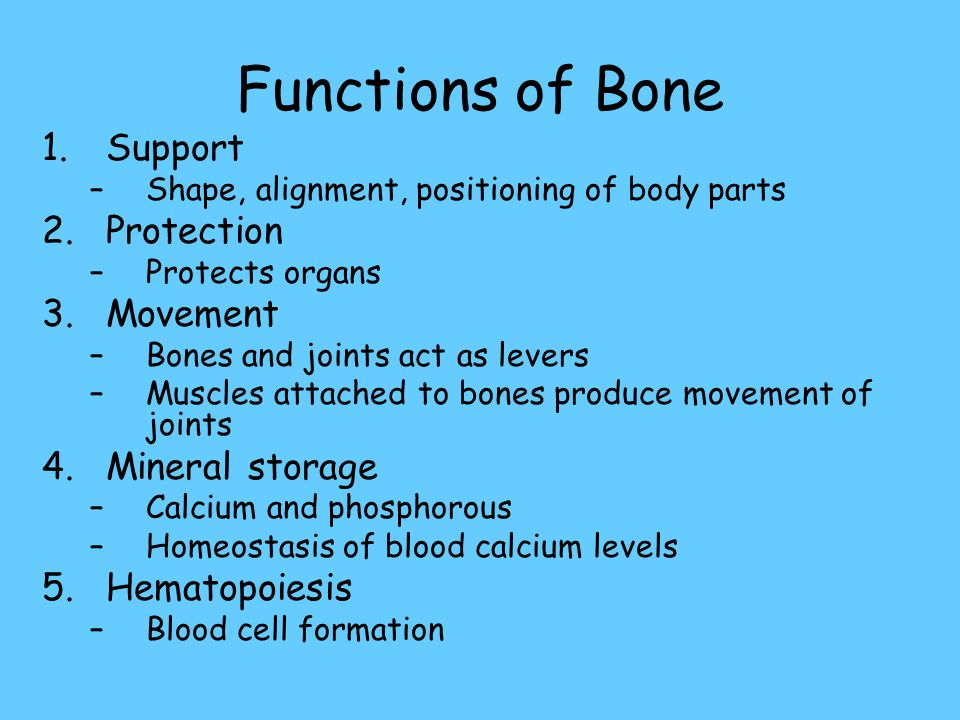 Functions of Bone Support Protection Movement Mineral storage