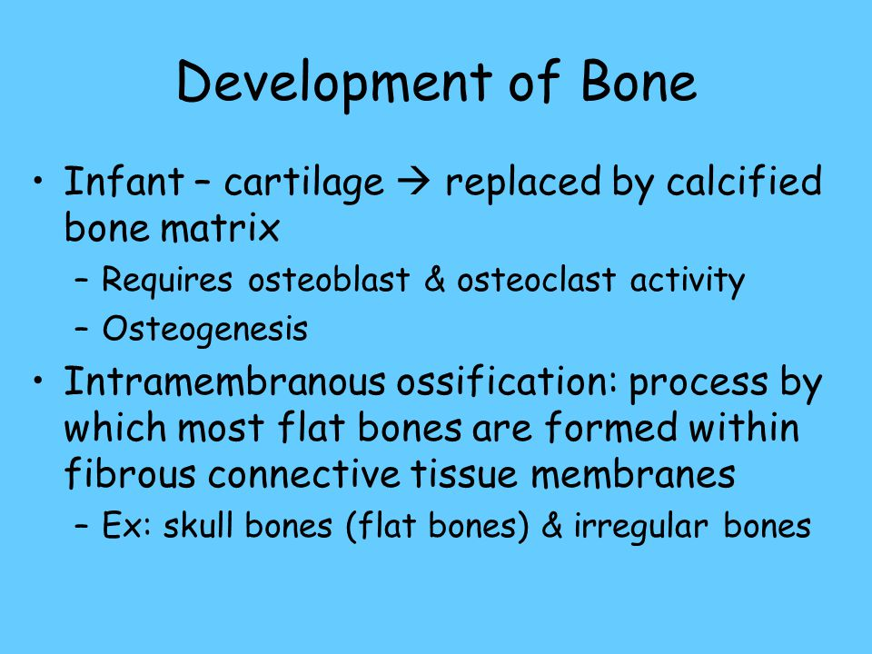 Development of Bone Infant – cartilage  replaced by calcified bone matrix. Requires osteoblast & osteoclast activity.