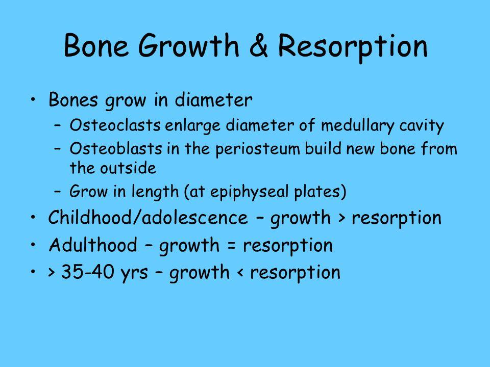 Bone Growth & Resorption