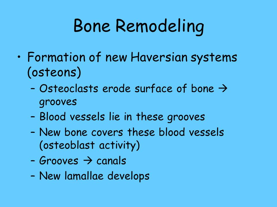 Bone Remodeling Formation of new Haversian systems (osteons)