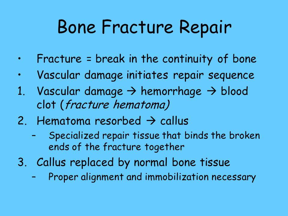 Bone Fracture Repair Fracture = break in the continuity of bone