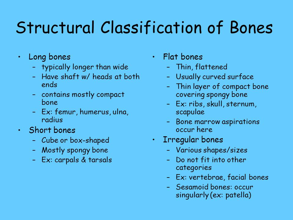 Structural Classification of Bones