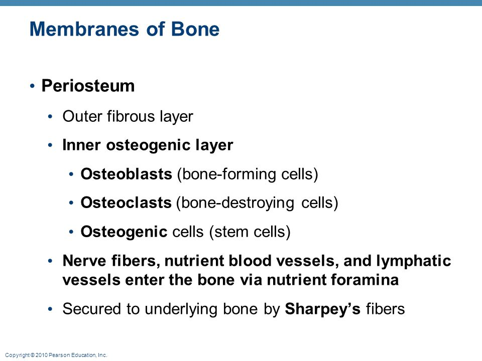 Membranes of Bone Periosteum Outer fibrous layer