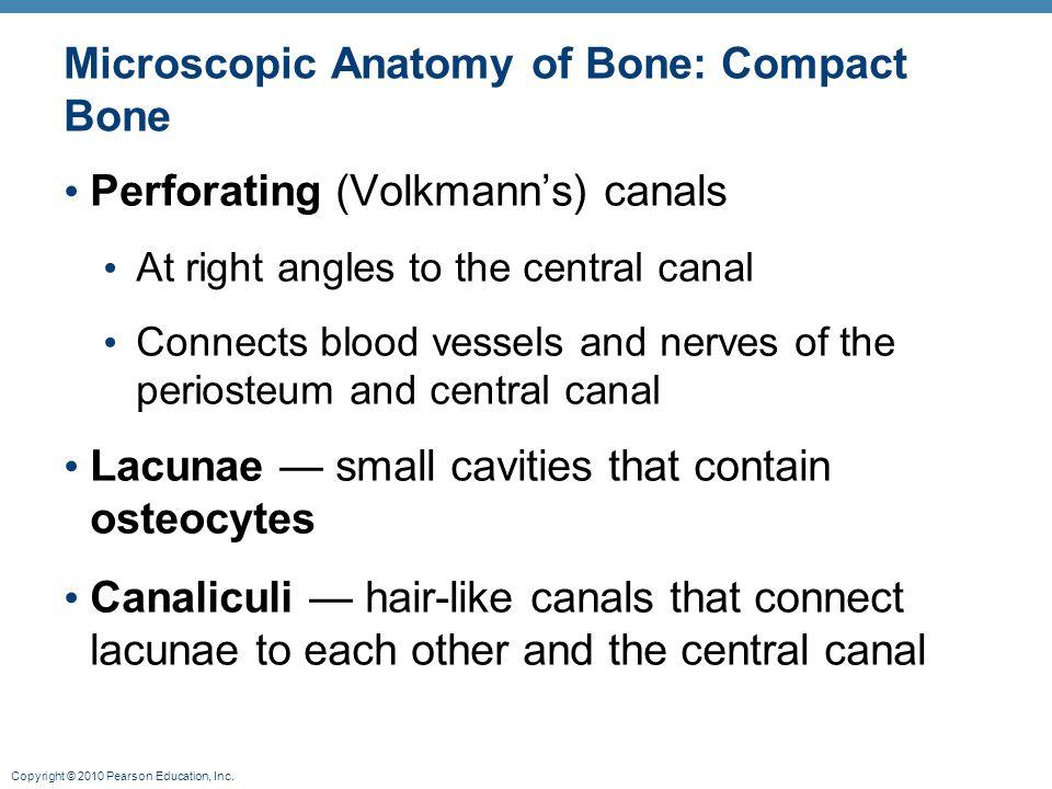 Microscopic Anatomy of Bone: Compact Bone