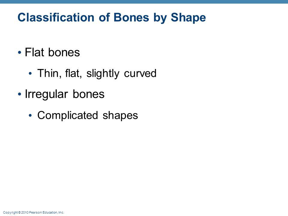 Classification of Bones by Shape