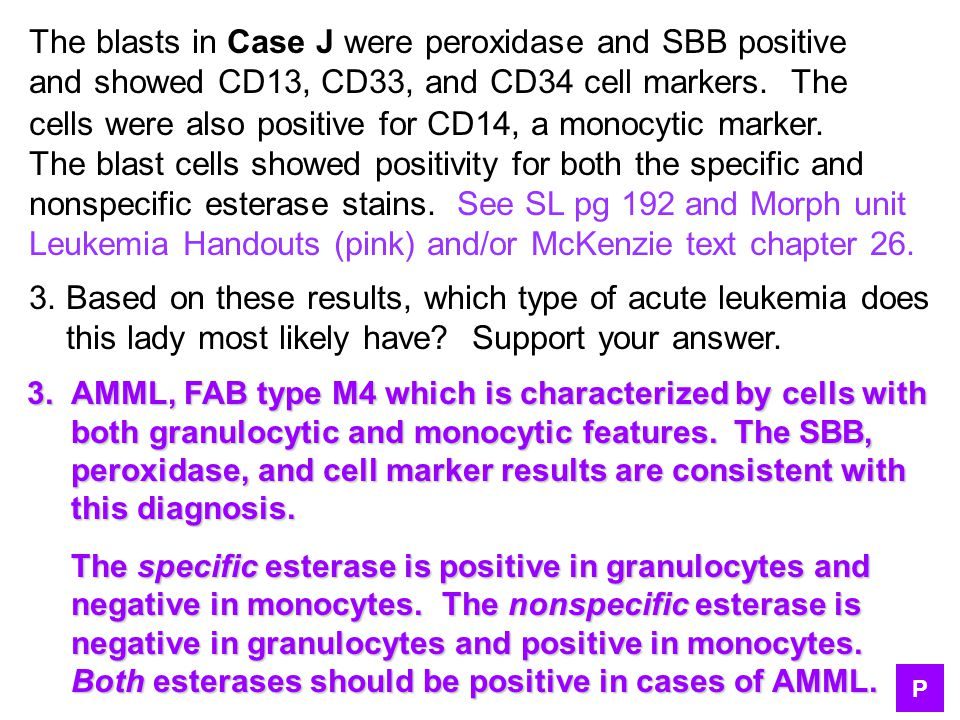 The blasts in Case J were peroxidase and SBB positive