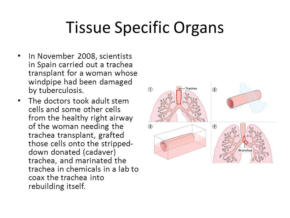 Tissue Specific Organs