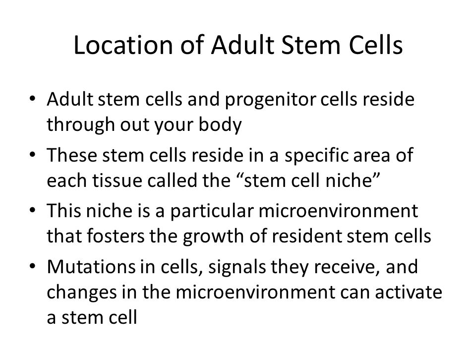 Location of Adult Stem Cells