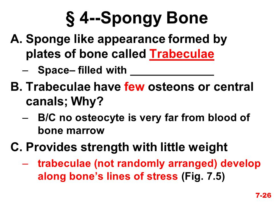 § 4--Spongy Bone Sponge like appearance formed by plates of bone called Trabeculae. Space– filled with ______________.