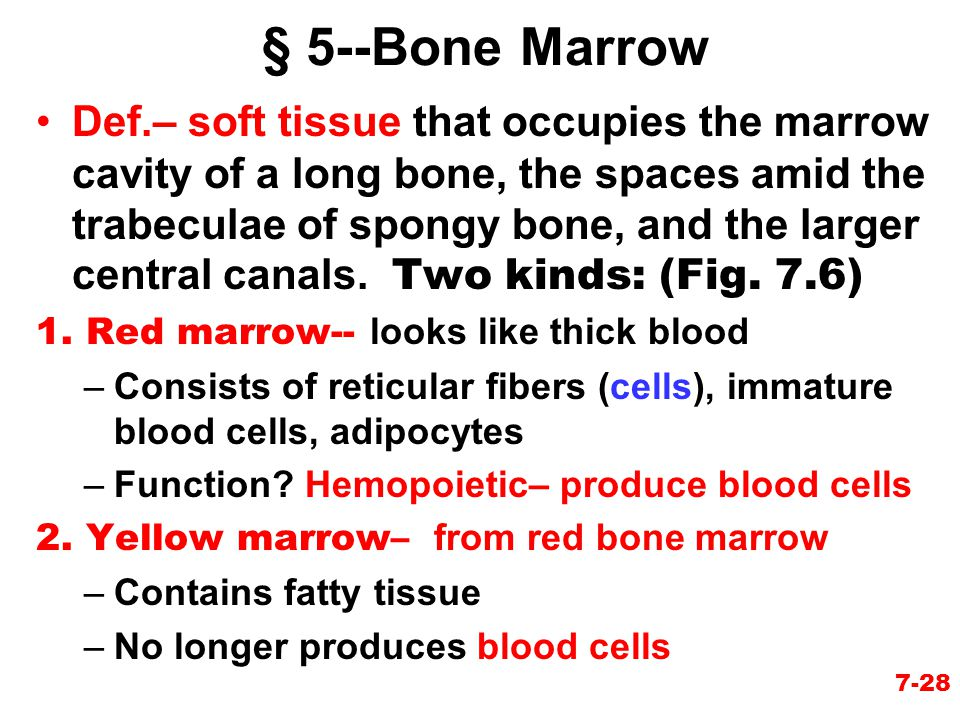 § 5--Bone Marrow
