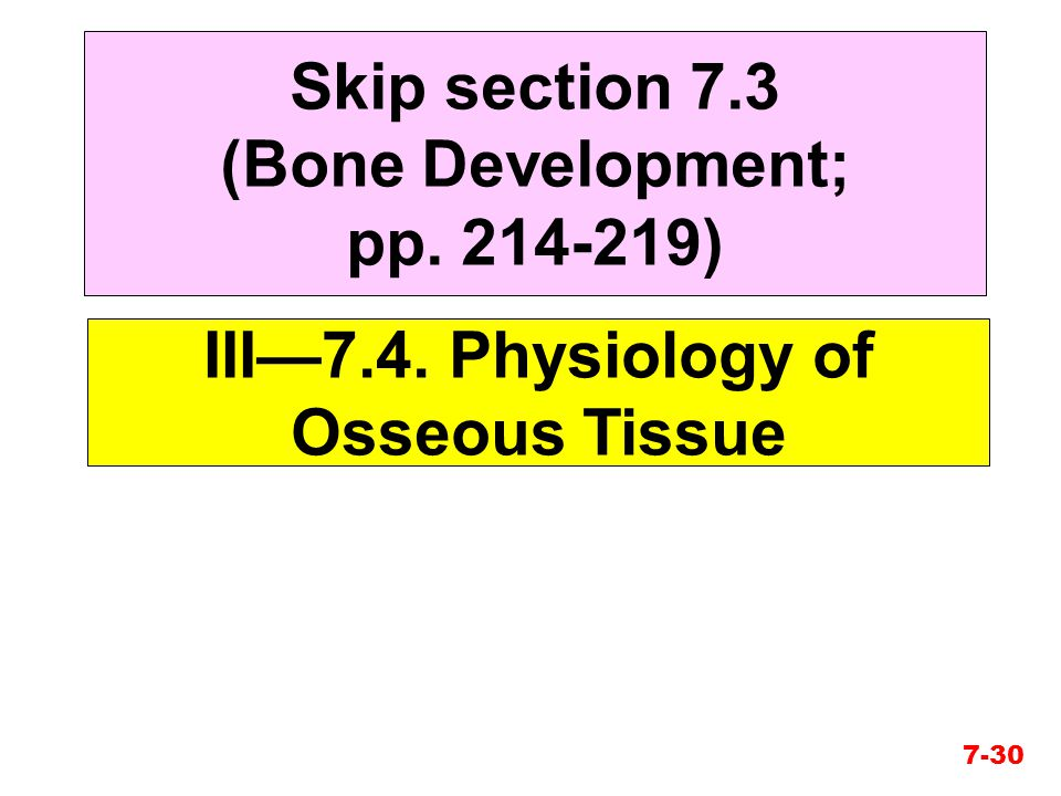 Skip section 7.3 (Bone Development; pp. 214-219)