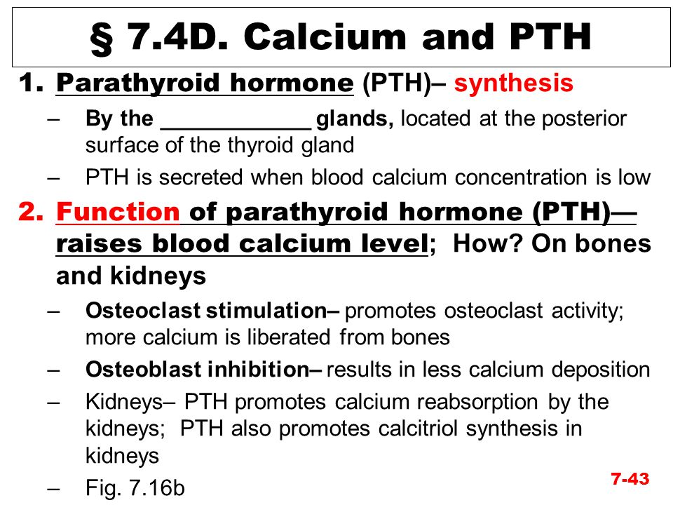 § 7.4D. Calcium and PTH Parathyroid hormone (PTH)– synthesis