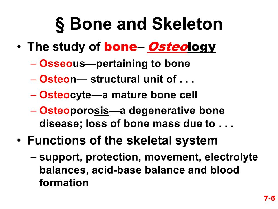 § Bone and Skeleton The study of bone– Osteology