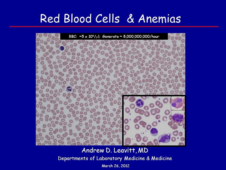 Red Blood Cells & Anemias