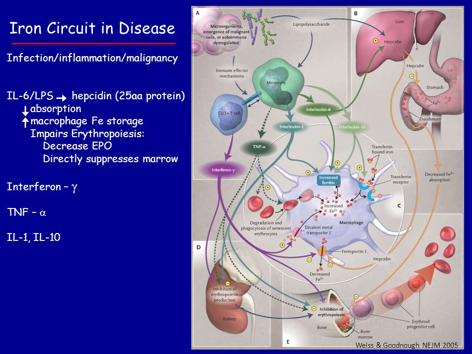 Iron Circuit in Disease