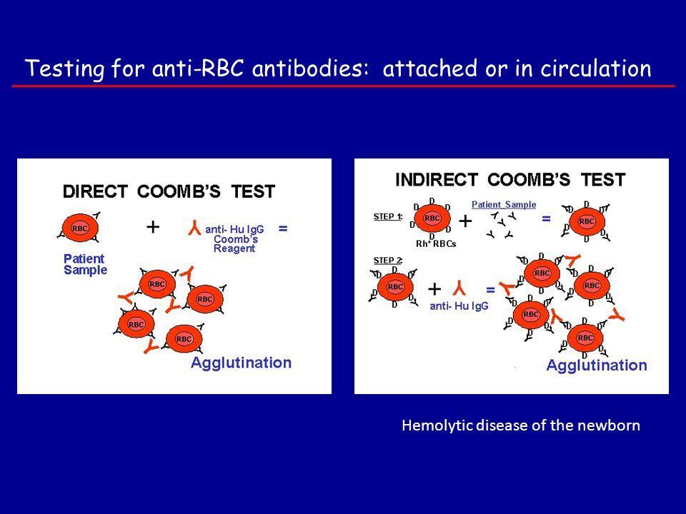 Testing for anti-RBC antibodies: attached or in circulation