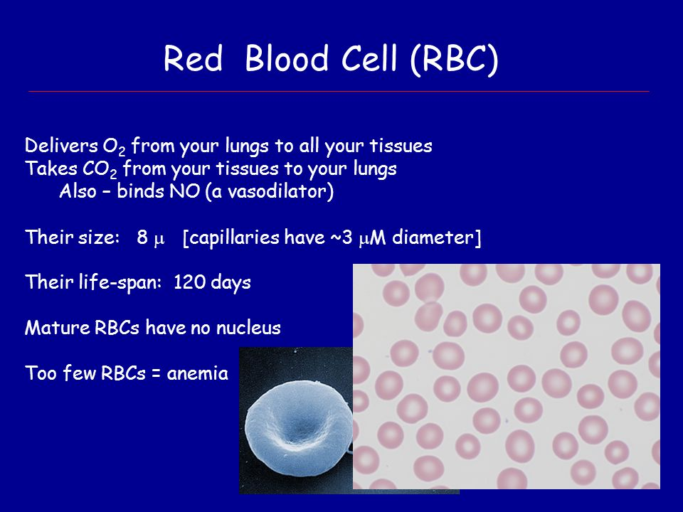 Red Blood Cell (RBC) Delivers O2 from your lungs to all your tissues