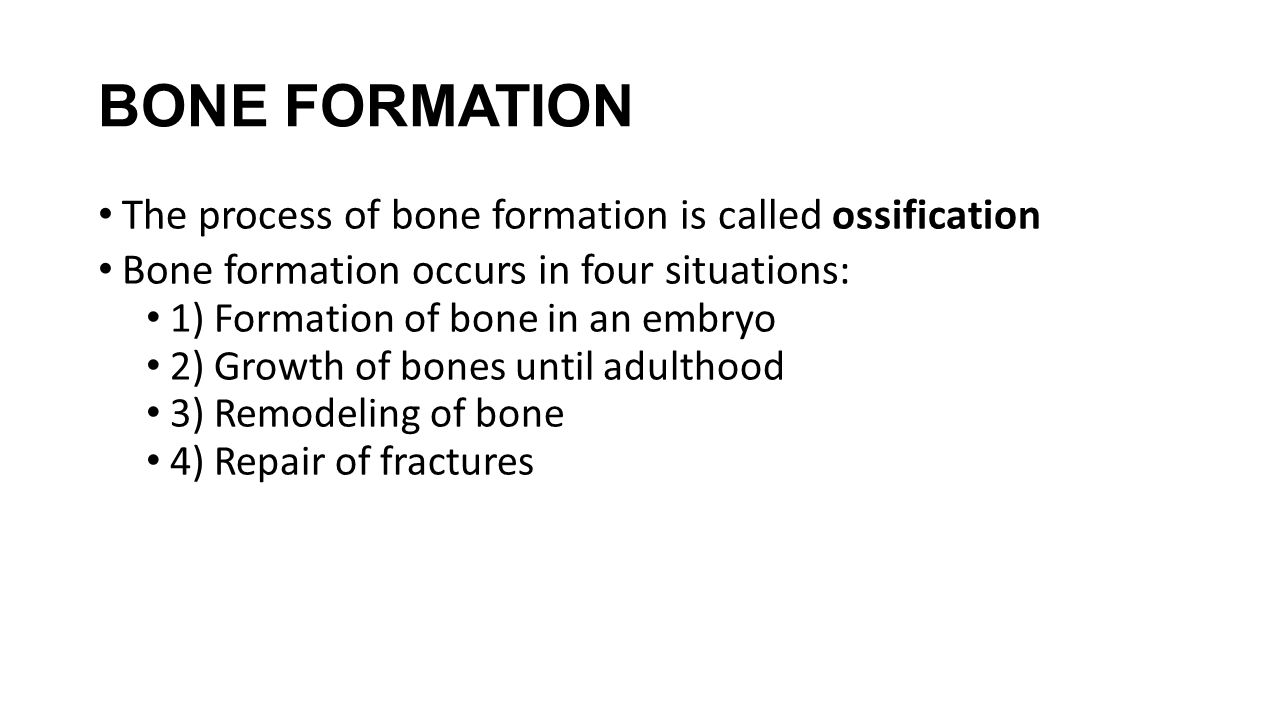 BONE FORMATION The process of bone formation is called ossification