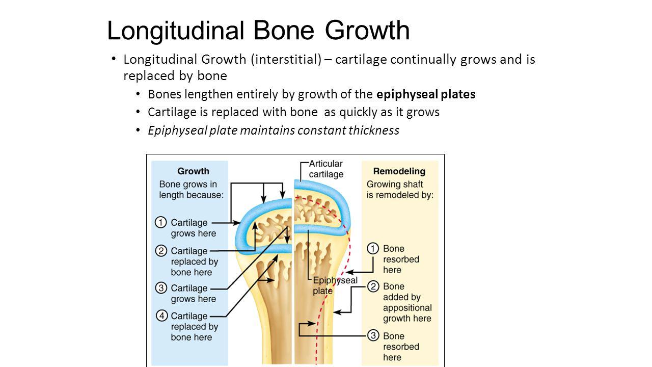 Longitudinal Bone Growth