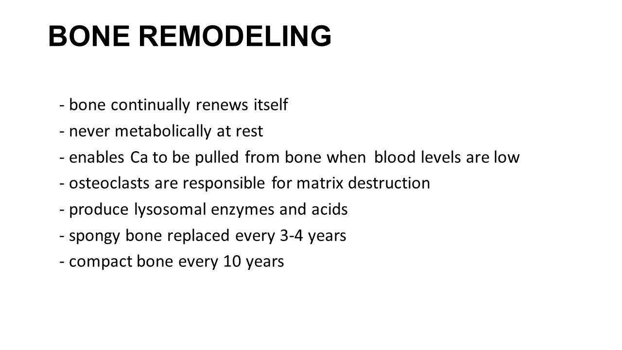 BONE REMODELING - bone continually renews itself