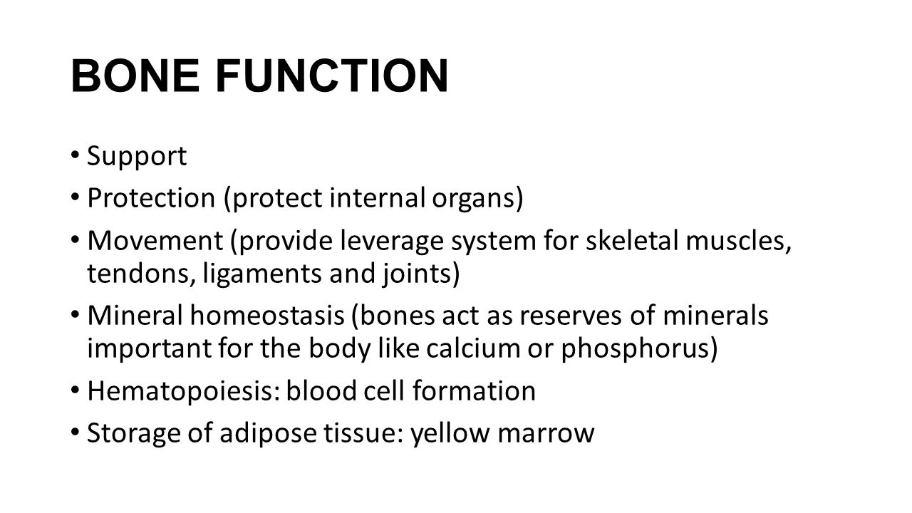 BONE FUNCTION Support Protection (protect internal organs)