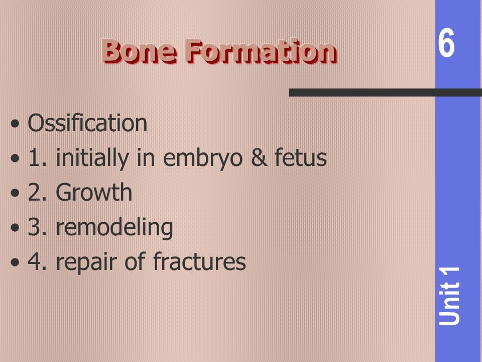 Bone Formation Ossification 1. initially in embryo & fetus 2. Growth