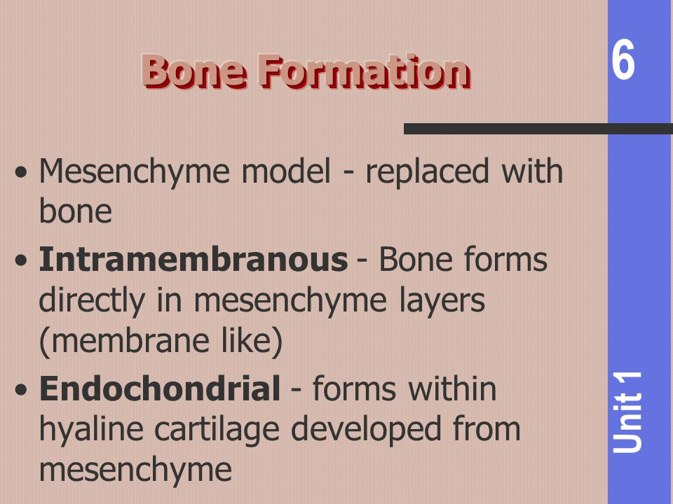 Bone Formation Mesenchyme model - replaced with bone
