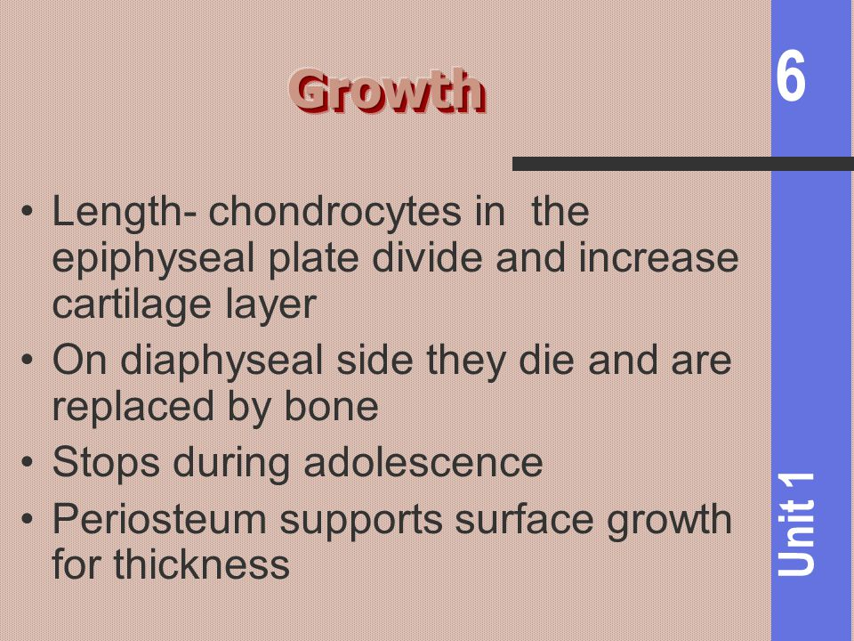Growth Length- chondrocytes in the epiphyseal plate divide and increase cartilage layer. On diaphyseal side they die and are replaced by bone.