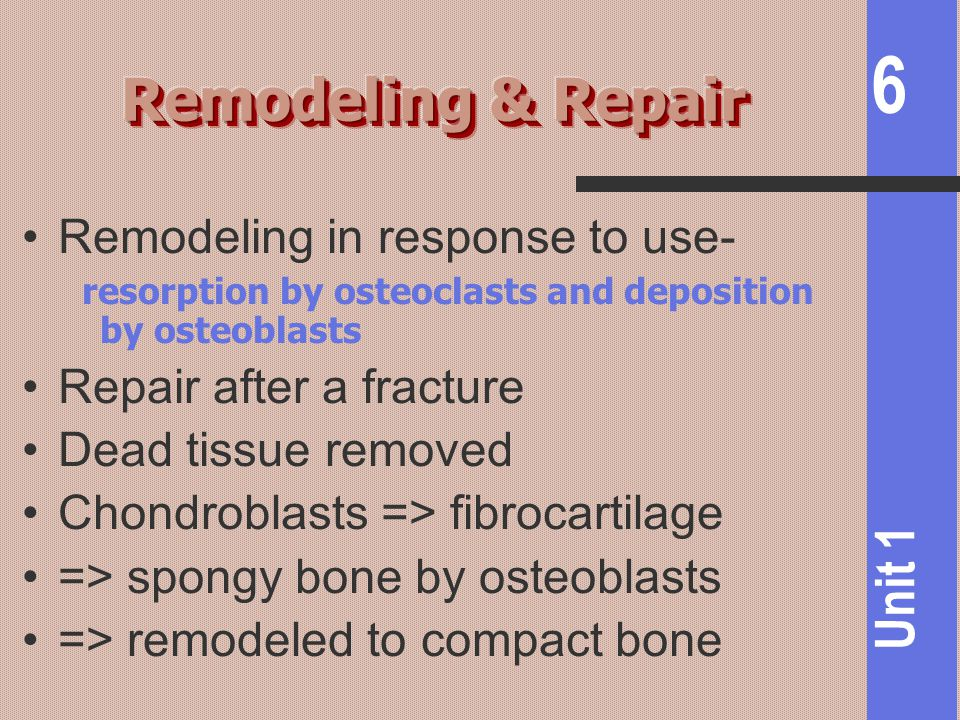 Remodeling & Repair Remodeling in response to use-