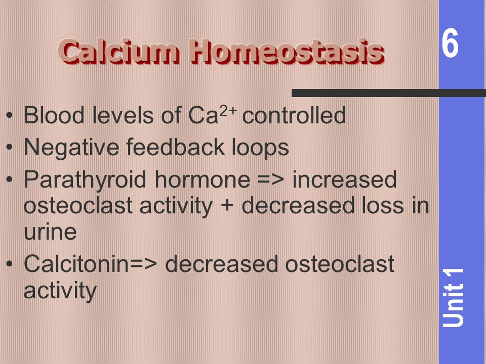 Calcium Homeostasis Blood levels of Ca2+ controlled