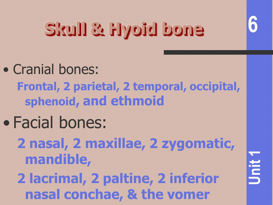 Skull & Hyoid bone Facial bones: Cranial bones: