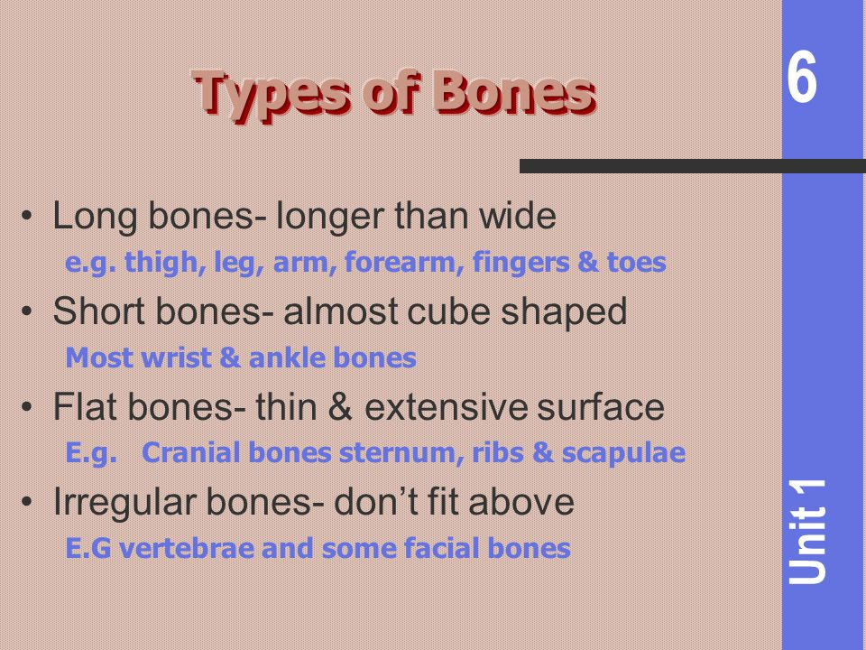 Types of Bones Long bones- longer than wide