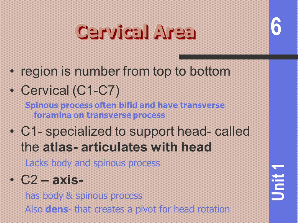 Cervical Area region is number from top to bottom Cervical (C1-C7)