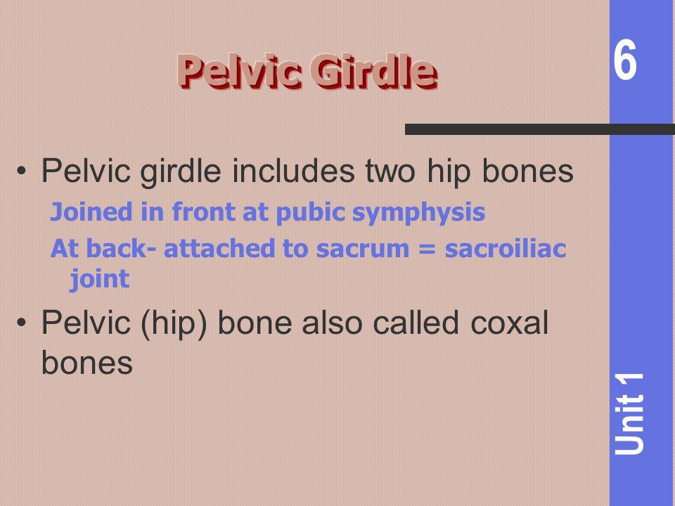 Pelvic Girdle Pelvic girdle includes two hip bones