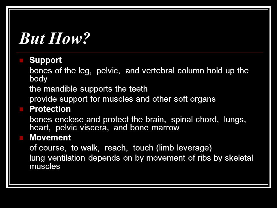 But How Support. bones of the leg, pelvic, and vertebral column hold up the body. the mandible supports the teeth.