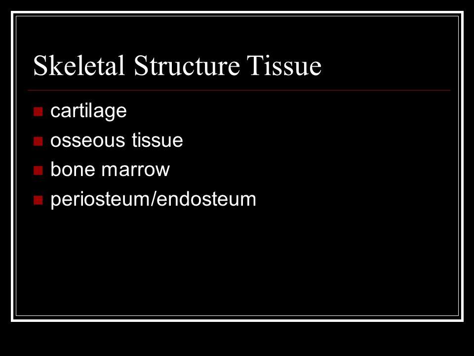 Skeletal Structure Tissue