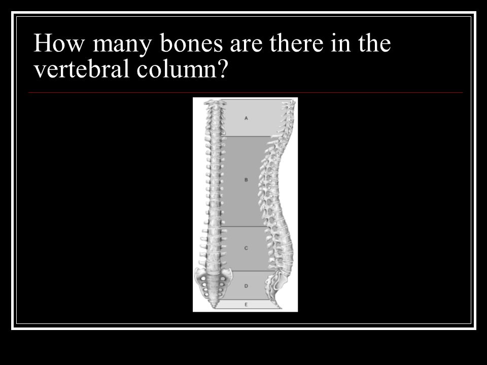 How many bones are there in the vertebral column