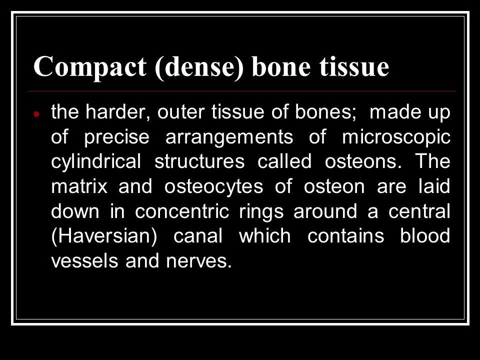 Compact (dense) bone tissue