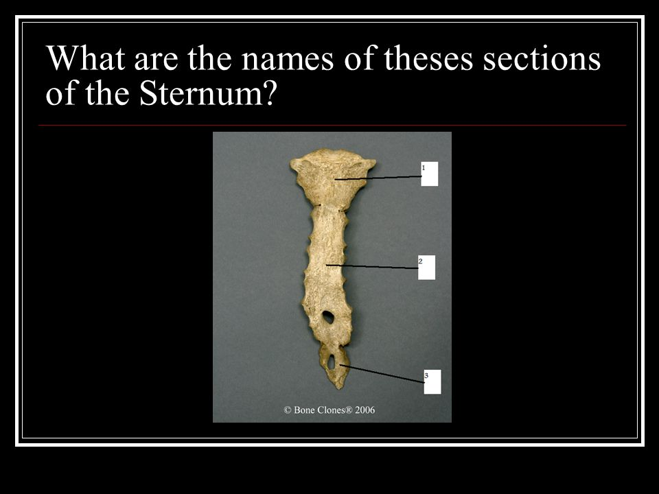 What are the names of theses sections of the Sternum