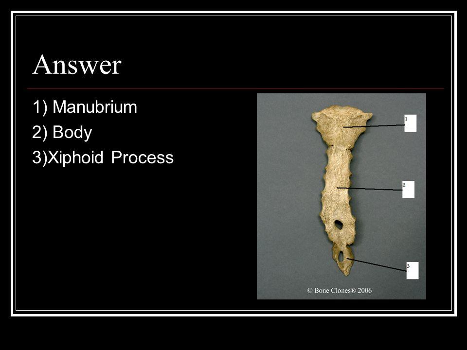 Answer 1) Manubrium 2) Body 3)Xiphoid Process
