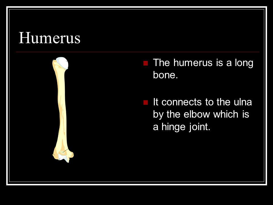 Humerus The humerus is a long bone.