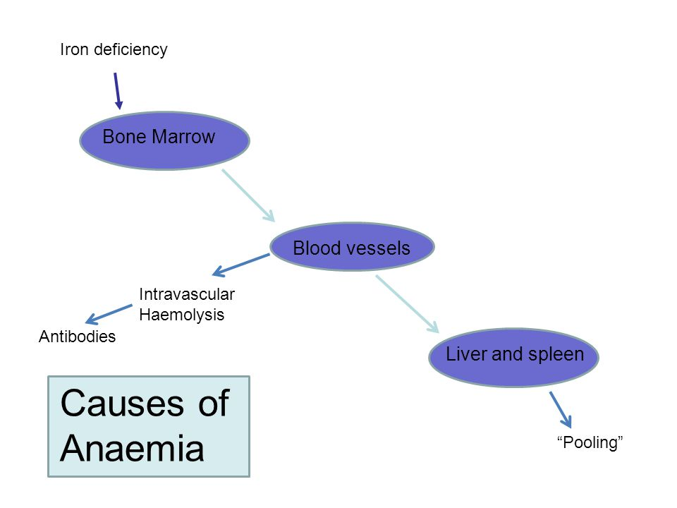 Causes of Anaemia Bone Marrow Blood vessels Liver and spleen